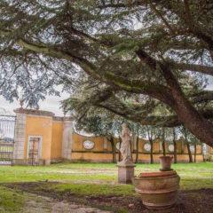 Giornata Nazionale degli Alberi, vi raccontiamo un nostro albero