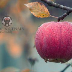 Potatura, quando e come operare in giardino e nel frutteto